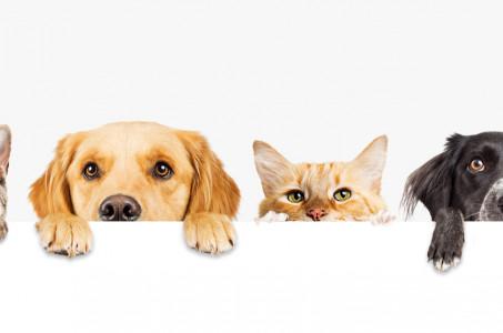 Pet Free or Pet Friendly?